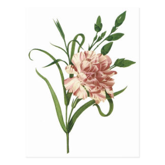 Gartennelke Postkarte