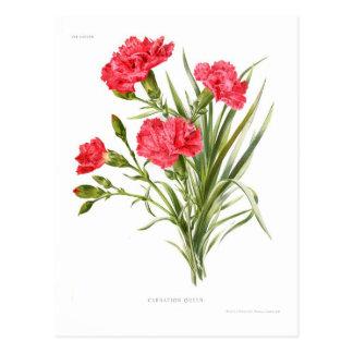 Gartennelke 'Queen Postkarte