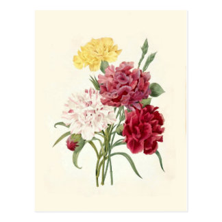 Gartennelken durch Pierre-Joseph Redouté Postkarten