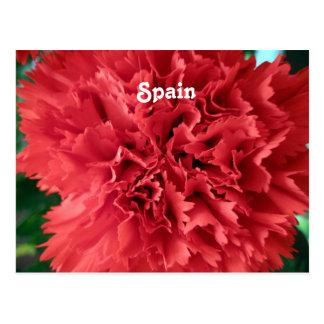Gartennelken in Spanien Postkarte