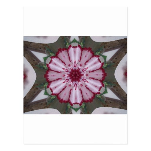 Gartennelken-Kaleidoskop Postkarte