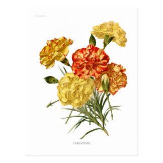 Gartennelken Postkarte