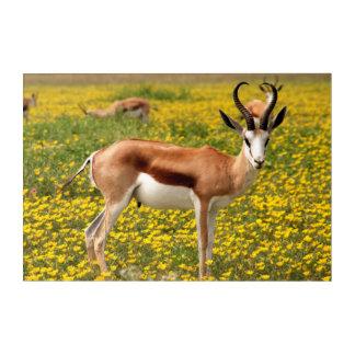Gazelle in der Wiese Acryldruck