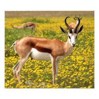Gazelle in der Wiese Fotodruck
