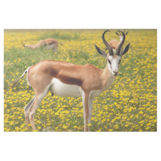 Gazelle in der Wiese Galerieleinwand