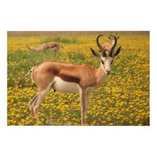 Gazelle in der Wiese Holzdruck
