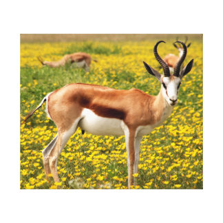 Gazelle in der Wiese Leinwanddruck