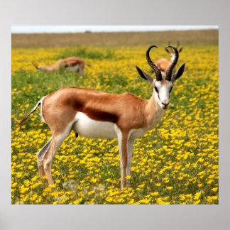 Gazelle in der Wiese Poster
