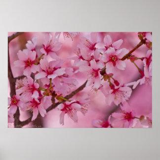 Gebadet im rosa japanischen Kirschblüten-Plakat Poster