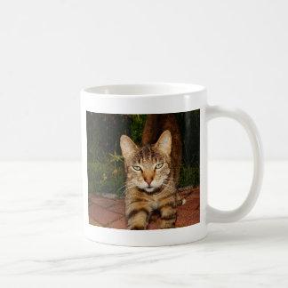 Gebohrte Miezekatze-Katze Kaffeetasse