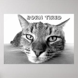 Geborener müder Kitty Poster