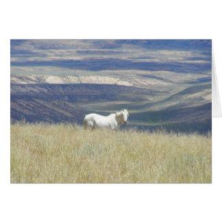 Geborenes freies wildes Mustang-Pferd Grußkarte