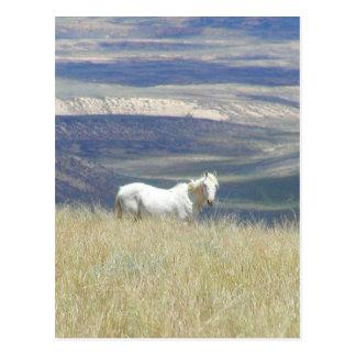 Geborenes freies wildes Mustang-Pferd Postkarte