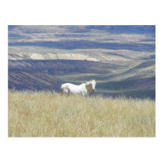 Geborenes freies wildes Mustang-Pferd Postkarten