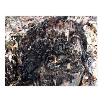 Gebrannter Baum-Stumpf Postkarte