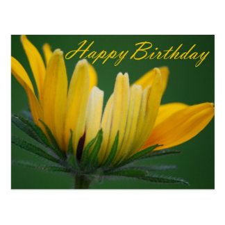 Geburtstag - gelbes Gänseblümchen Postkarte