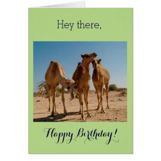 Geburtstags-Kamele Karte