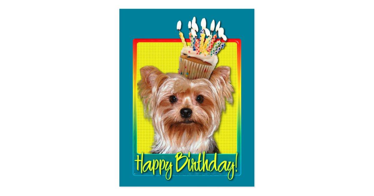 Geburtstags Kleiner Kuchen Yorkshire Terrier Postkarte Zazzle