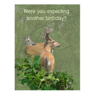 Geburtstags-Weißwedelhirsch-Dollar u. Damhirschkuh Postkarte