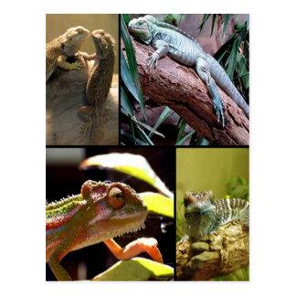 Gecko-Eidechsen und Chamäleone Postkarte