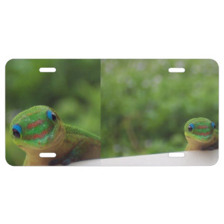 Gecko in Hawaii US Nummernschild