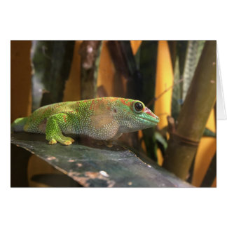 Gecko notecard karte