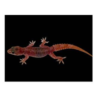 Gecko Postkarte