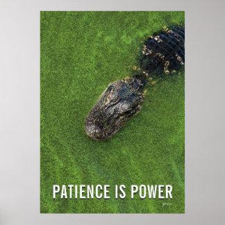 Geduld ist Power • Florida-AlligatorFoto • Poster