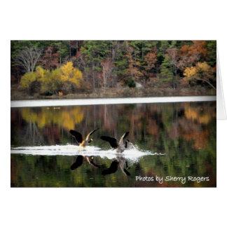 ~Geese auf Clayton Lake~ Karte