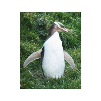 Gefährdete gelbe mit Augen Penguin-Leinwand Leinwanddruck