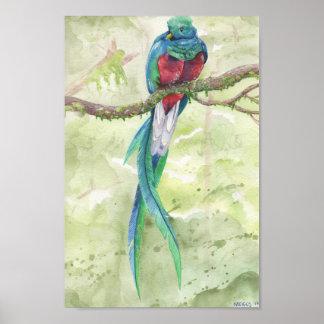 Gefährdetes Quetzal Poster