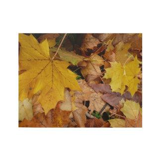 Gefallener Ahorn verlässt gelbe Herbst-Natur Holzposter