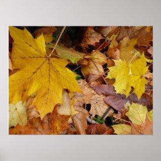Gefallener Ahorn verlässt gelbe Herbst-Natur Poster