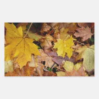 Gefallener Ahorn verlässt gelbe Herbst-Natur Rechteckiger Aufkleber
