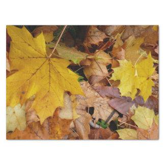 Gefallener Ahorn verlässt gelbe Herbst-Natur Seidenpapier