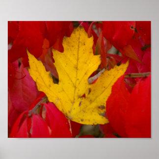 Gefallenes Herbst-Blatt unter brennenden Bush Poster