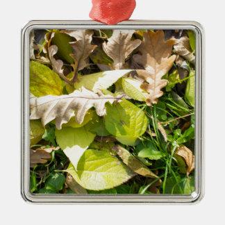 Gefallenes Herbst-Blätter auf Rasen des grünen Silbernes Ornament