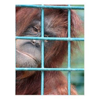 Gefängnis Postkarte