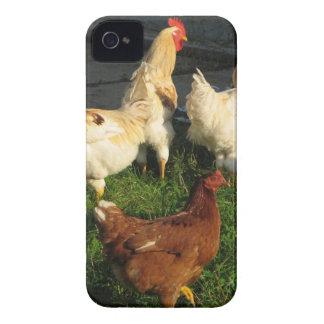 Geflügel iPhone 4 Hüllen