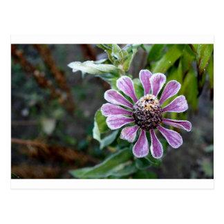 Gefrorene Blumenpostkarte Postkarte