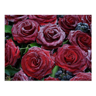 Gefrorene Rosen Postkarte