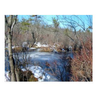 Gefrorener Sumpfgebiet-Teich Postkarten