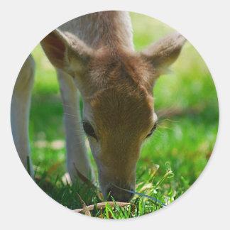 Gehen Grün für Rotwild-Antilope Runder Aufkleber