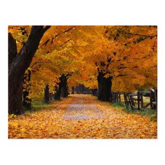 Gehen hinunter die alten Zeiten des Herbstes Postkarte