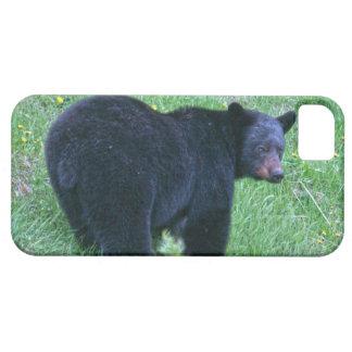 Gehender schwarzer Bärn-Tier-Designer-Kasten iPhone 5 Schutzhülle
