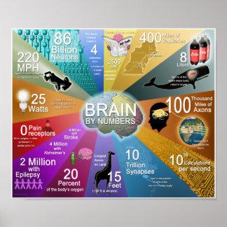 Gehirn durch Zahlen Poster