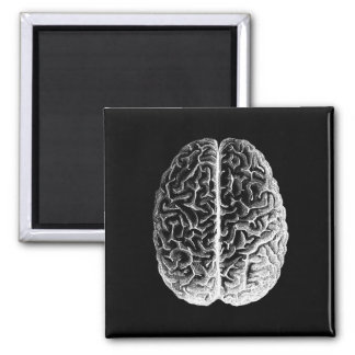 Gehirne! Quadratischer Magnet