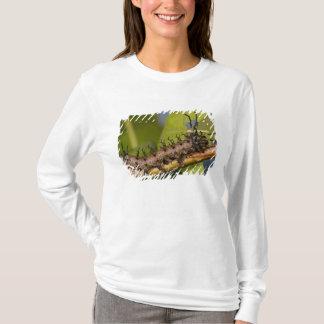 Gehörnte Teufel-Raupe Arizonas, Citheronia T-Shirt