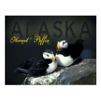 Gehörnter Papageientaucher, Alaska Postkarte