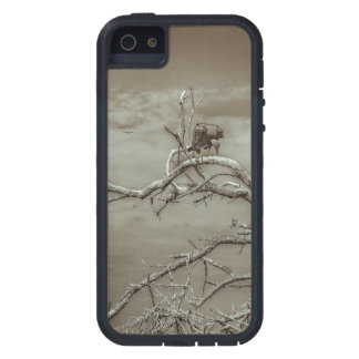 Geier an der Spitze Leaveless Baums Hülle Fürs iPhone 5